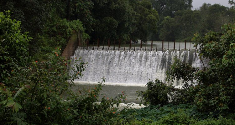 Abbey Falls Coorg (Timings, Entry Fee, Images, Best time to