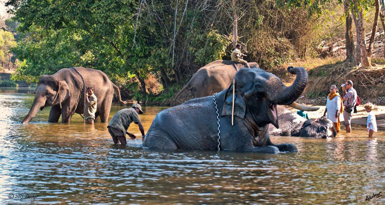 Places to Visit Dubare Elephant Camp, Coorg